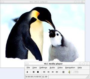 vlclinuxaz5.jpg